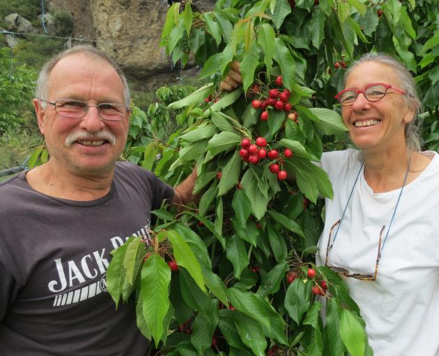 Luke and Shona Denton, of Frogrock Orchard, in the Teviot Valley, were among the first of the valley's orchardists to have cherries for sale at the weekend. Photo: Yvonne O'Hara