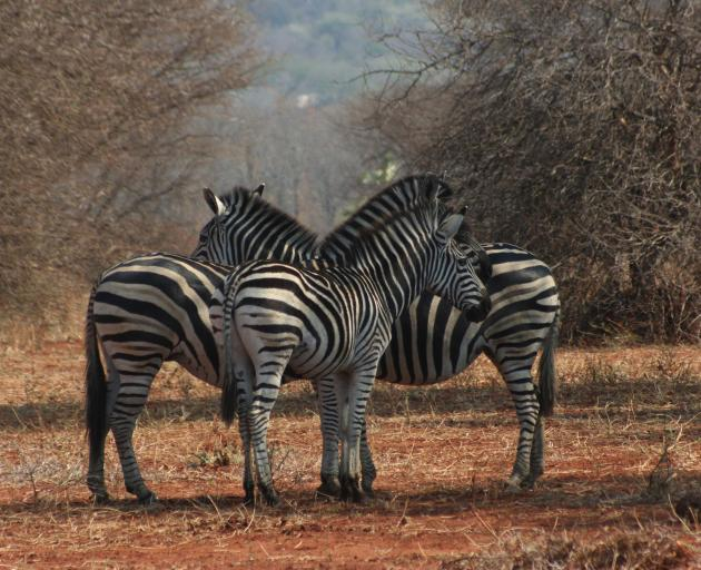 Africa's wildlife is incredible, with each game drive different from one another. You may not see...