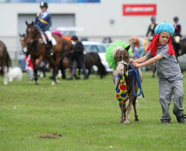 Ryan Davidson tries to keep  miniature pony Zorro in line during the grand parade.