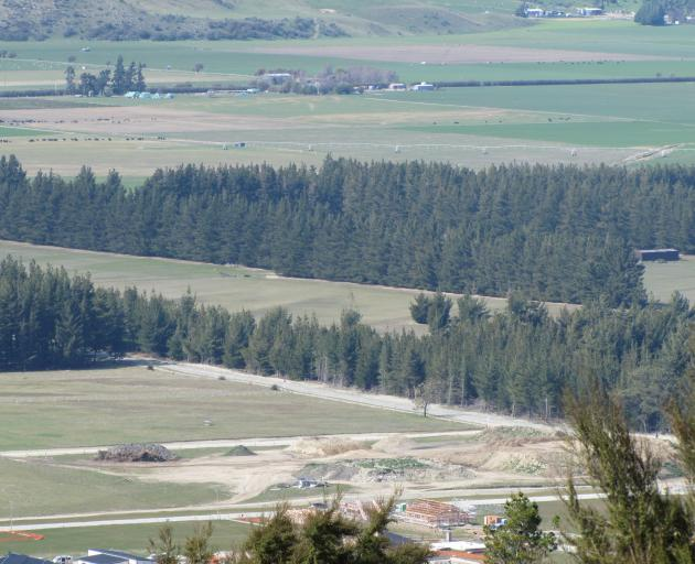 The area of land among pine trees south of Cemetery Rd, Lake Hawea, where a 400-lot subdivision...