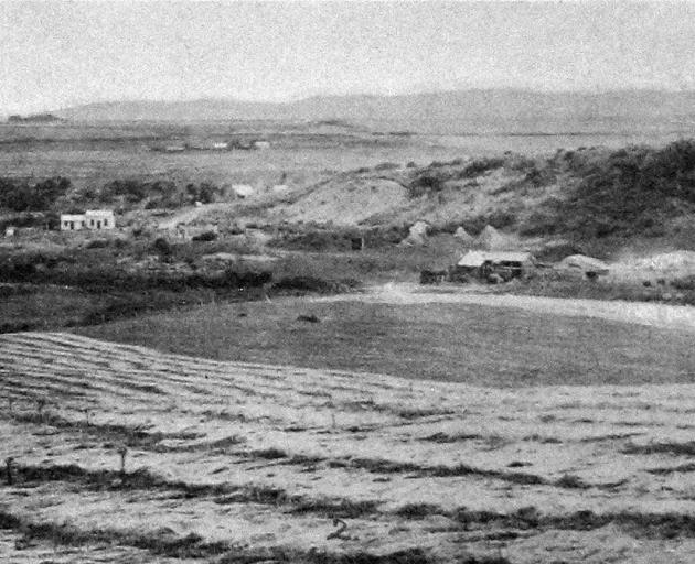 Mr Brown's flaxmill at Hokonui, with swathes of flax drying in the foreground. - Otago Witness, 11.12.1918.