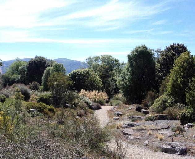 The alpine scree garden at Dunedin Botanic Garden. Photo: Supplied