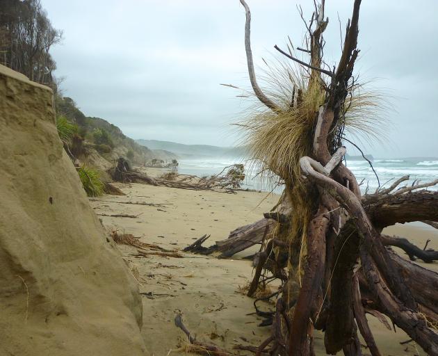 Coastal erosion at Tahakopa Beach, in the Catlins. Dunedin author Neville Peat will speak on the...