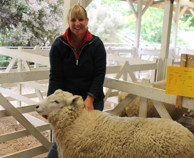 Waikaka woman Pip Wilson holds her Perendale ram which sold for the top price of $8200 at the Gore Ram Sale on Tuesday. Photo: Kayla Hodge