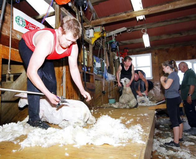 Shaun Mathieson (left) joins other shearers and woolhandlers, who shore almost 2000 sheep to raise money for charity. Photo: Giordano Stolley