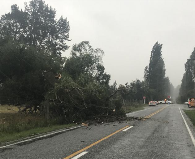 Tree down on Hunter Road. Photo Daisy Hudson