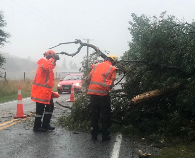 Workers inspect a fallen tree on Speargrass Flat Rd in Arrowtown. Photo: Daisy Hudson