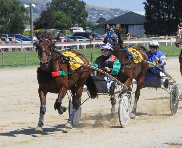 Ellie Barron drives Holdon Toyaspurs in the Pick and Shovel junior drivers trot at the Oamaru Racecourse yesterday. Photo: Hamish MacLean