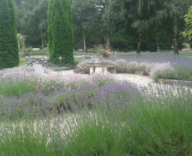 Danseys Pass lavender. PHOTO: NICOLA MCCLOY