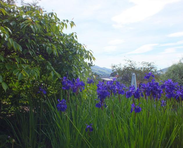 Beyond the garden, Mt Cargill can be seen.