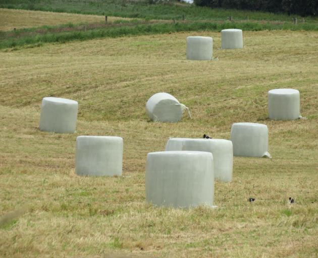 This season's high baleage production will add to the problems of correctly disposing of bale wrap. Photo: Yvonne O'Hara