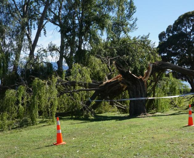 The strong southerly broke some trees on the Lake Wanaka foreshore. Photo: Sean Nugent