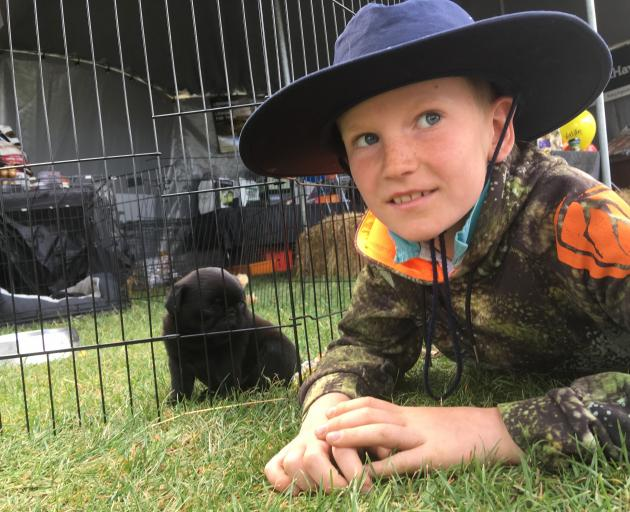 Jordy Cameron (8), of Wanaka, introduces himself to a puppy on display at the Central Otago A&P...