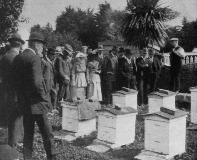 由政府养蜂教官E. A. Earp先生在Naismith先生的养蜂场Mosgiel进行养蜂工作的实际演示。 -  Otago Witness,19.2.1919。