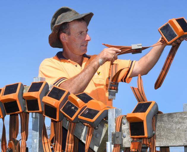 Waipori farm manager Dave Vaughan examines electronic collars.