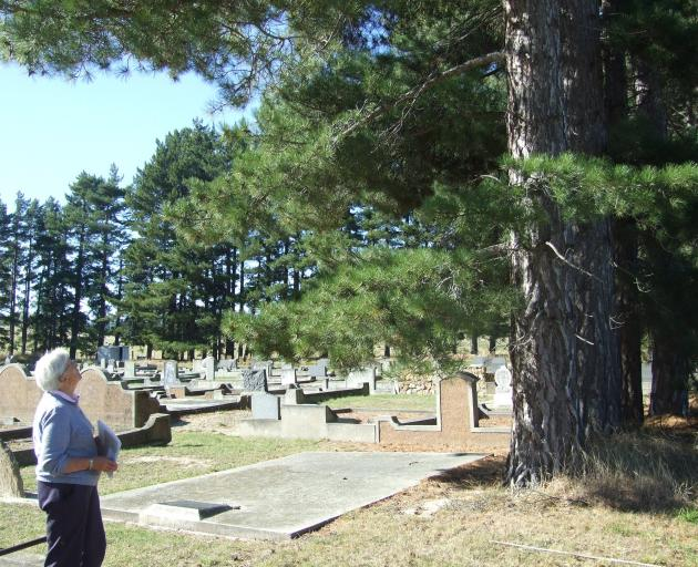 Omakau居民Penny Sinnamon最后一眼看到Omakau's Blacks的一棵松树......