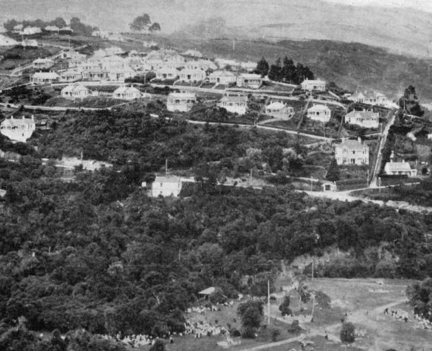 达尼丁的一个新兴郊区:来自毛利山的达尔莫尔,在前景中展示了Woodhaugh花园的一部分。 -  Otago Witness,19.4.1919