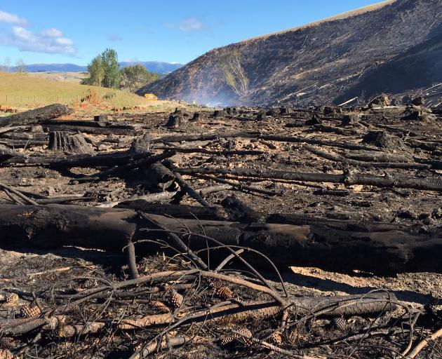 在劳伦斯附近烧毁约20公顷的失控烧伤的后果。照片:理查德......