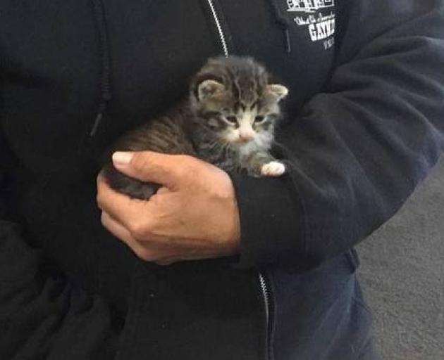 Nathan Gunn rescued this kitten from a drain at his school. Photo: Supplied