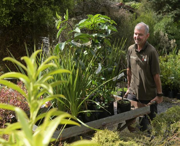 Ribbonwood Nurseries co-owner Philip Dunn with natives for the backyard. Photo: Linda Robertson