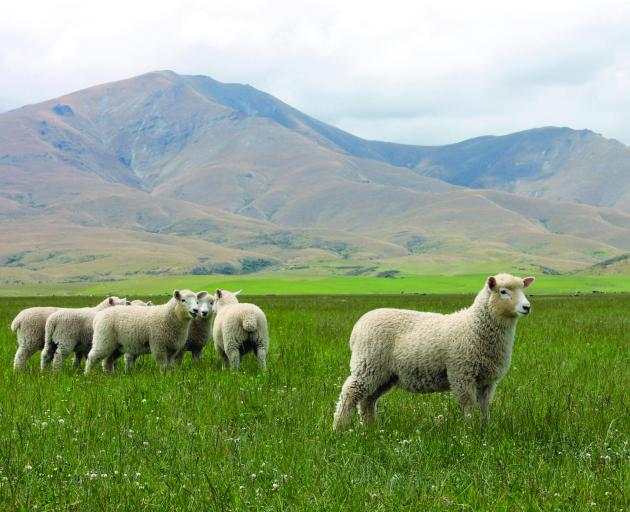 Provenance Lamb by Provenance Meat (Otago and Southland), Harraways  HARR-OS Oat Bites, Indian...