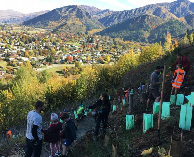 More than 60 volunteers spent Tuesday on Tobins Face, behind Arrowtown, planting 520 native seedlings in a section cleared of wilding pines by the Arrowtown Choppers last year. Photo: Supplied