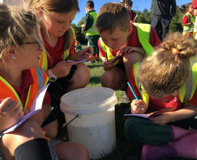 Hinds School year 4 pupils (from left) Marleah Black, Danielle Marriott, Cody Rollinson and Isla Pickford draw Canterbury mudfish from live samples caught on Akaunui Farm, at Eiffelton, southeast of Ashburton. Photos: Toni Williams