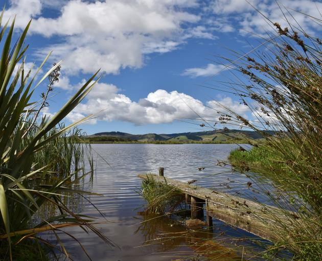 The Sinclair Wetlands on the Taieri Plain provides a home to 60 bird species and more than 100...