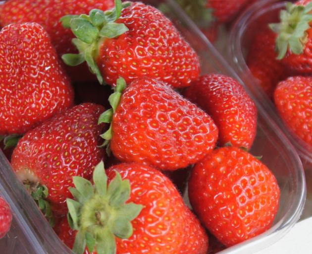 Researchers have been following strawberries from grower to retailer to find out how traceable produce is, in case of a recall. Photo: Wikimedia Commons