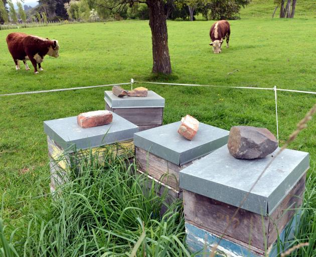 New Zealand beekeepers have been experiencing a softening in prices. Photo: Stephen Jaquiery