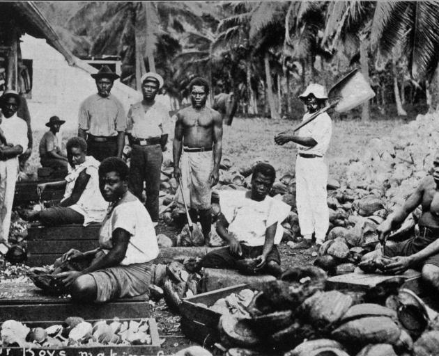 Labour boys making copra in Samoa. - Otago Witness, 14.5.1919