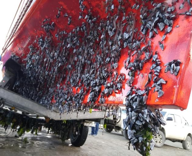 Mussels, barnacles and seaweed cover the bottom of Akros. PHOTO: SUPPLIED