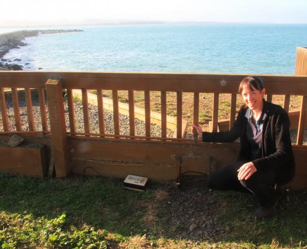 Oamaru Blue Penguin Colony science and environmental manager Dr Philippa Agnew shows off a ''No8...