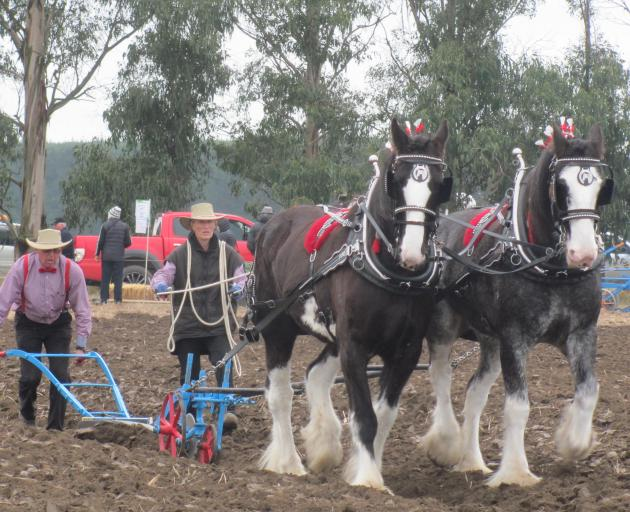 Title winners John and Sharon Chynoweth, of Oxford, show their winning form in the 2019 horse plough championship.