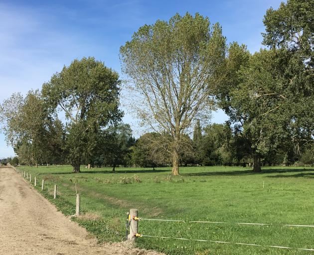 The landscape of the farm is unlike a traditional dairy farm, with fruit trees and aged trees on...