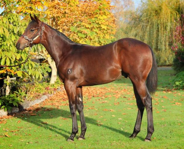 The weanling sold recently by Pear Tree Farm fro $40,000 at New Zealand Bloodstock's sale at...