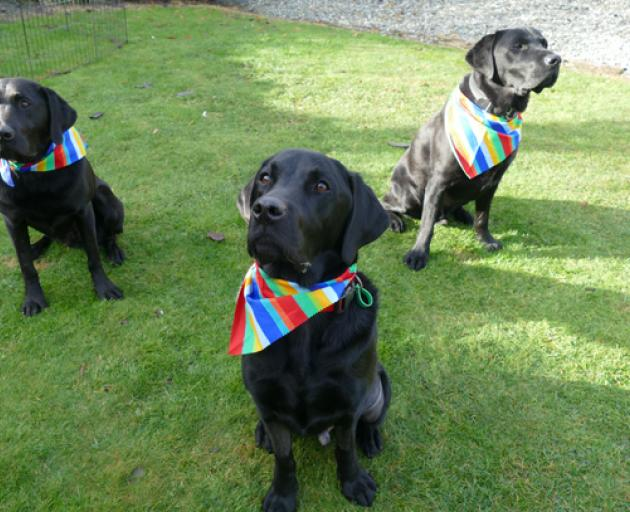 Argus, in the front, Pike, left, Mako, right. Photo: Supplied