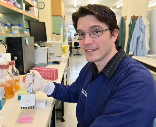 Professional Practice Fellow Braeden Donaldson prepares cell cultures yesterday. Photo: Linda Robertson