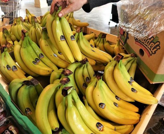 Five Photographs Of Banana In Seach Of >> Nz Could Go Bananas Over Climate Change Otago Daily Times Online News