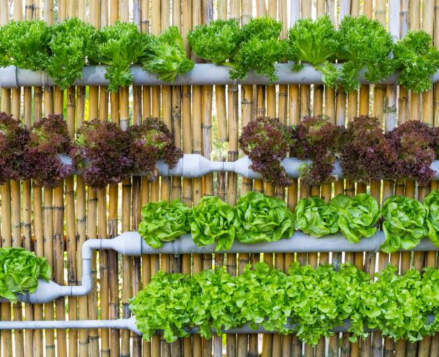 Re-purpose drainpipes and spouting for hydroponics in the glasshouse. Photo: Getty Images