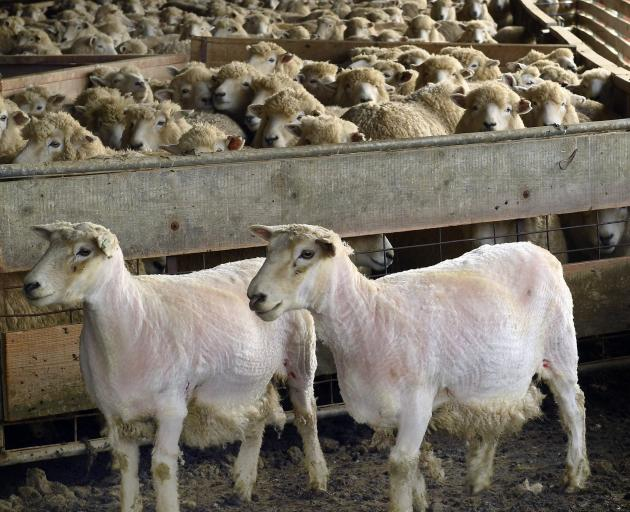 Sheep and beef farmers have seen demand for their products lift in recent months. Photo: Stephen...