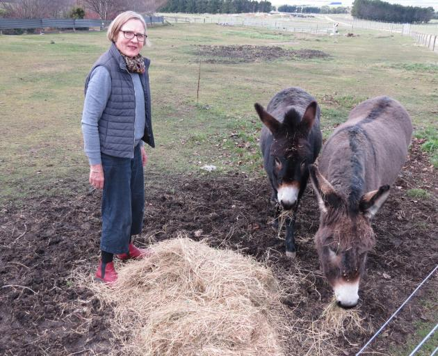 Gardener Jane Falconer, of Clachanburn, Puketoi, feeds donkeys Molly (left) and Toby. She would like to establish a garden trail and garden festival to encourage more tourists to visit the region. Photo: Yvonne O'Hara