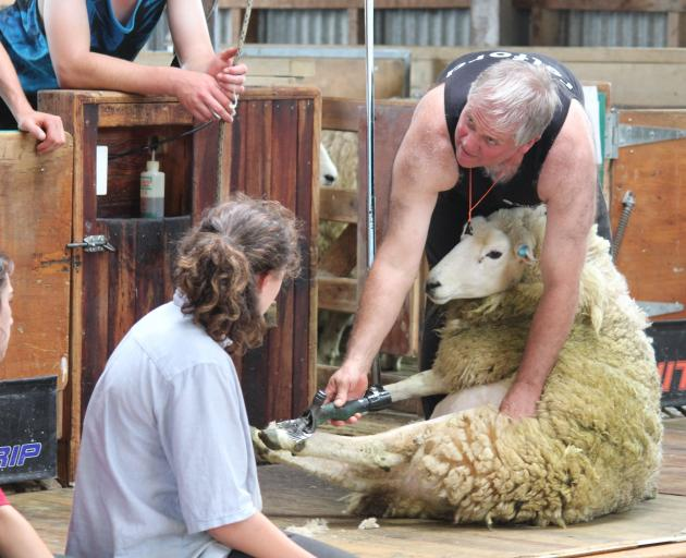 Strange Sheep And Local Rules As Tough As Opposition Otago