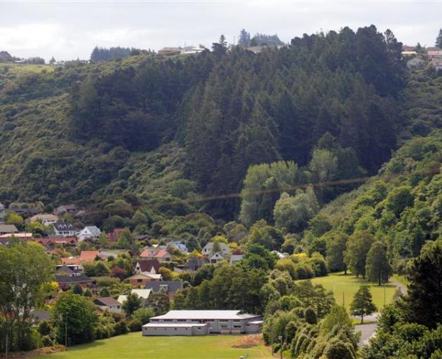 The 3ha stand of exotic trees at Frasers Gully, Dunedin, that blocks the sun at Glenross, below...