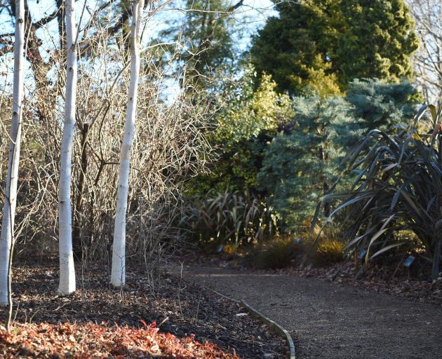 Betula utilis ssp. jacquemontii in one of the garden's theme borders provides texture. Photo:...