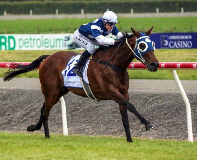 Canterbury mare Gifted will attempt to complete a hat-trick of wins in tomorrow's Oamaru Cup for...