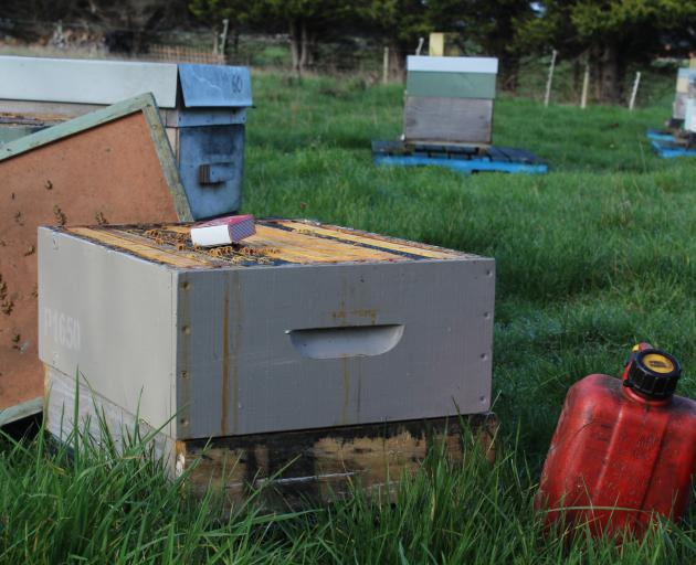 Preparing contaminated hives for destruction. Photos: Laura Smith