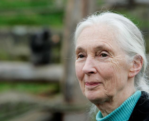 "Jane Goodall: ""I'm getting older but acting faster"". Photo: Getty Images"