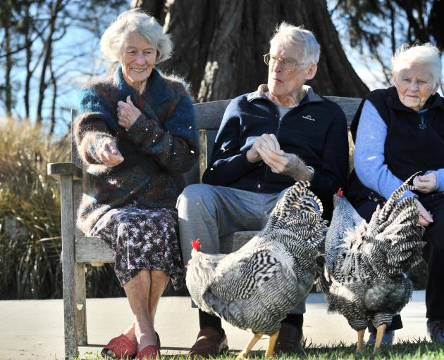 Feeding the Plymouth Rock roosters which have made themselves at home at Leslie Groves Hospital in Wakari, Dunedin, are (from left) Margaret Pennycuick (84), Grant Moody (89) and Patricia Siegle (90). Photo: Christine O'Connor