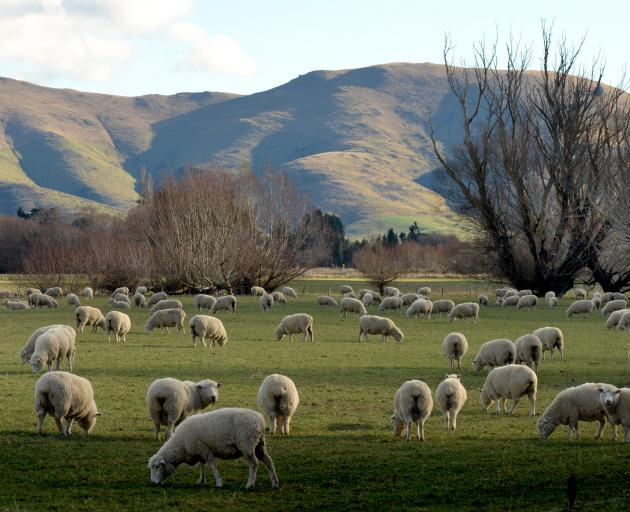 Revenue, profit and processing rates were all up for Invercargill's Blue Sky Meats; pictured,...